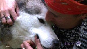 Des vies dédiées aux chiens polaires